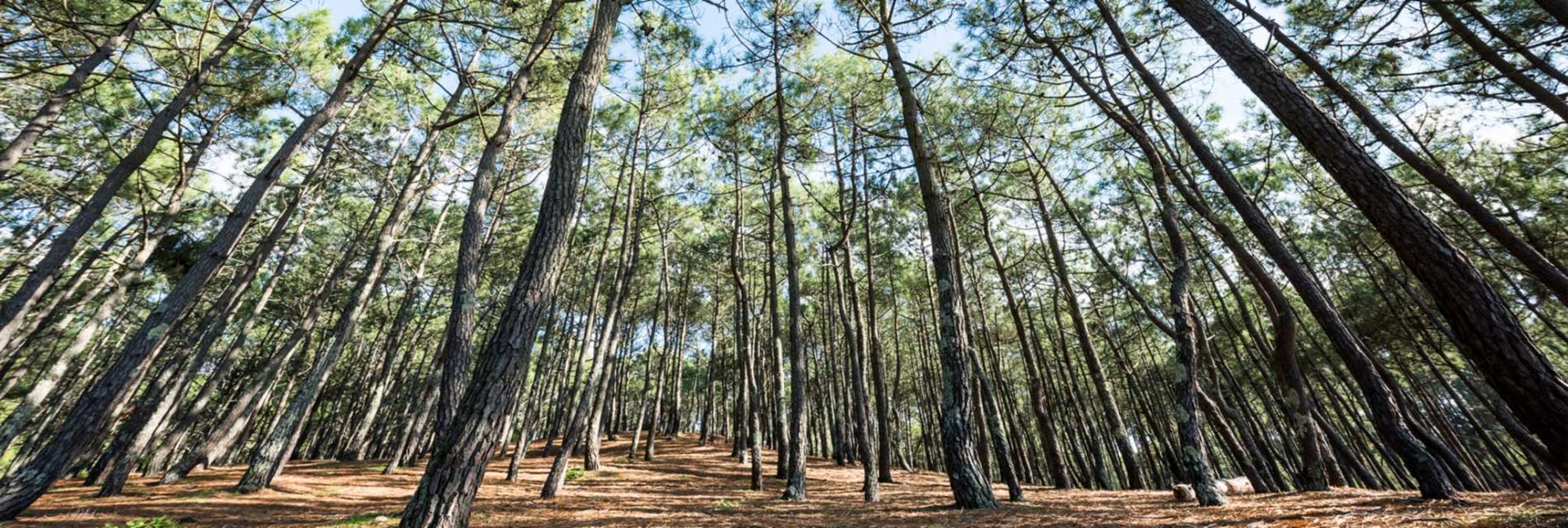 Slide les forêts des landes