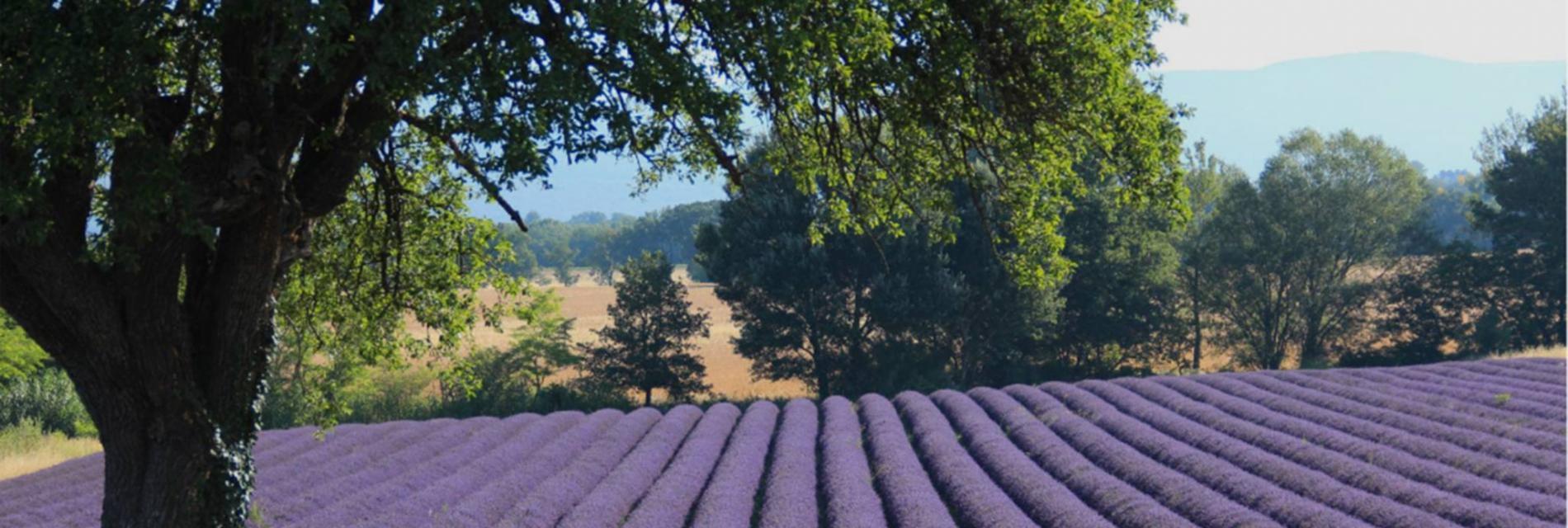 Slide Provence