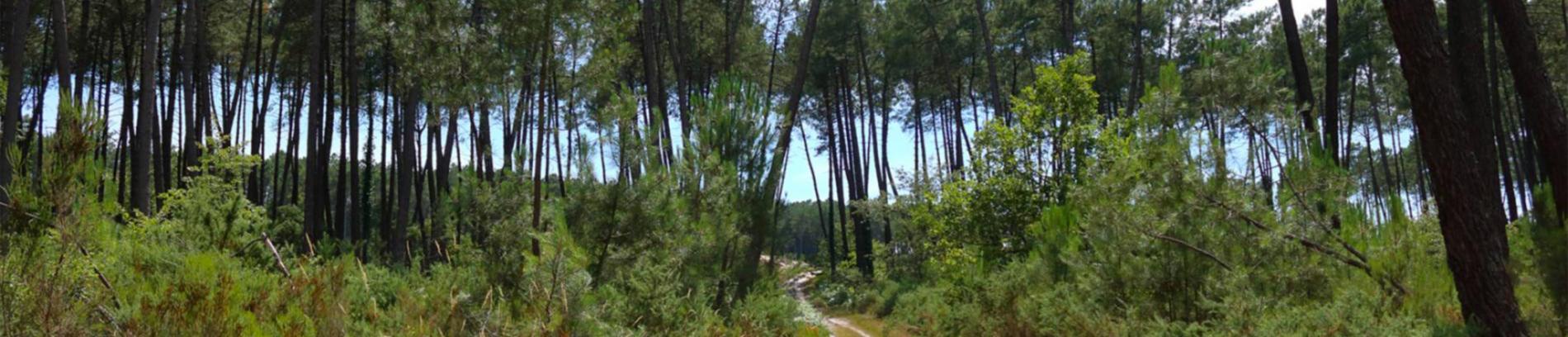 Slide Forêt des Landes